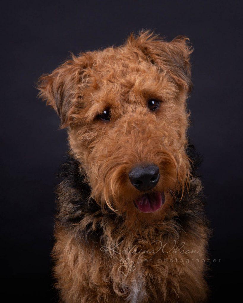 Award Winning Dog photographer Bedfordshire - Katrina Wilson-15