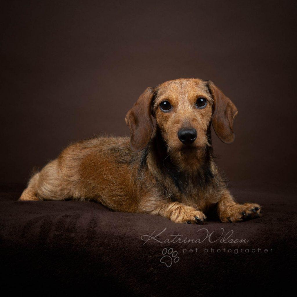 Award Winning Dog photographer Bedfordshire - Katrina Wilson-17