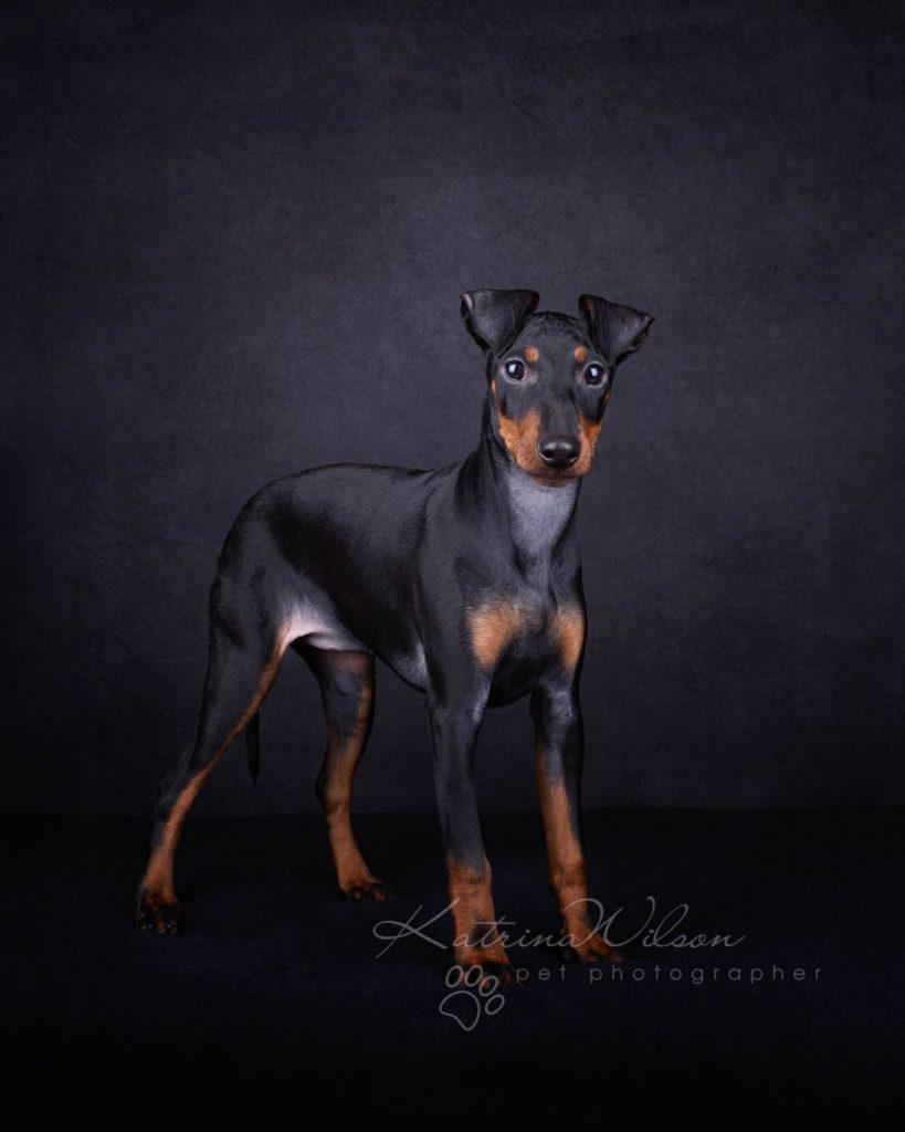 Award Winning Dog photographer Bedfordshire - Katrina Wilson-2