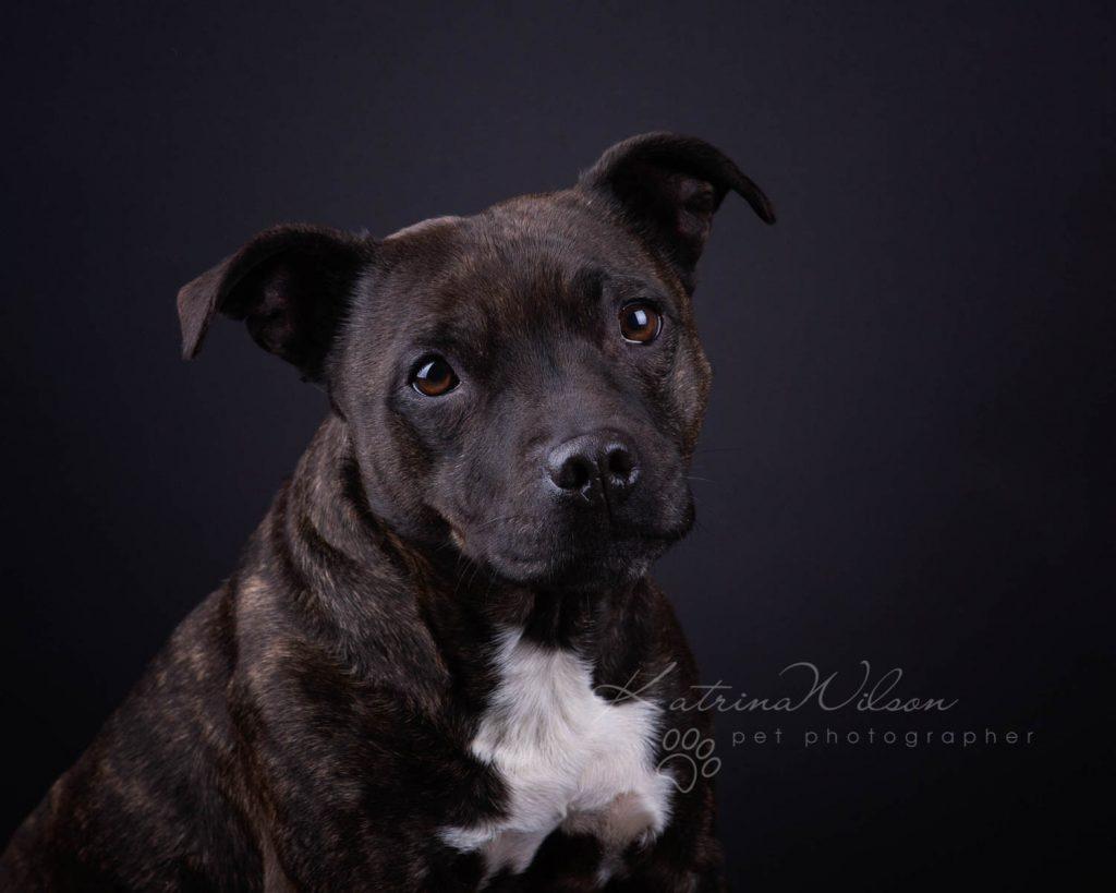 Award Winning Dog photographer Bedfordshire - Katrina Wilson-5