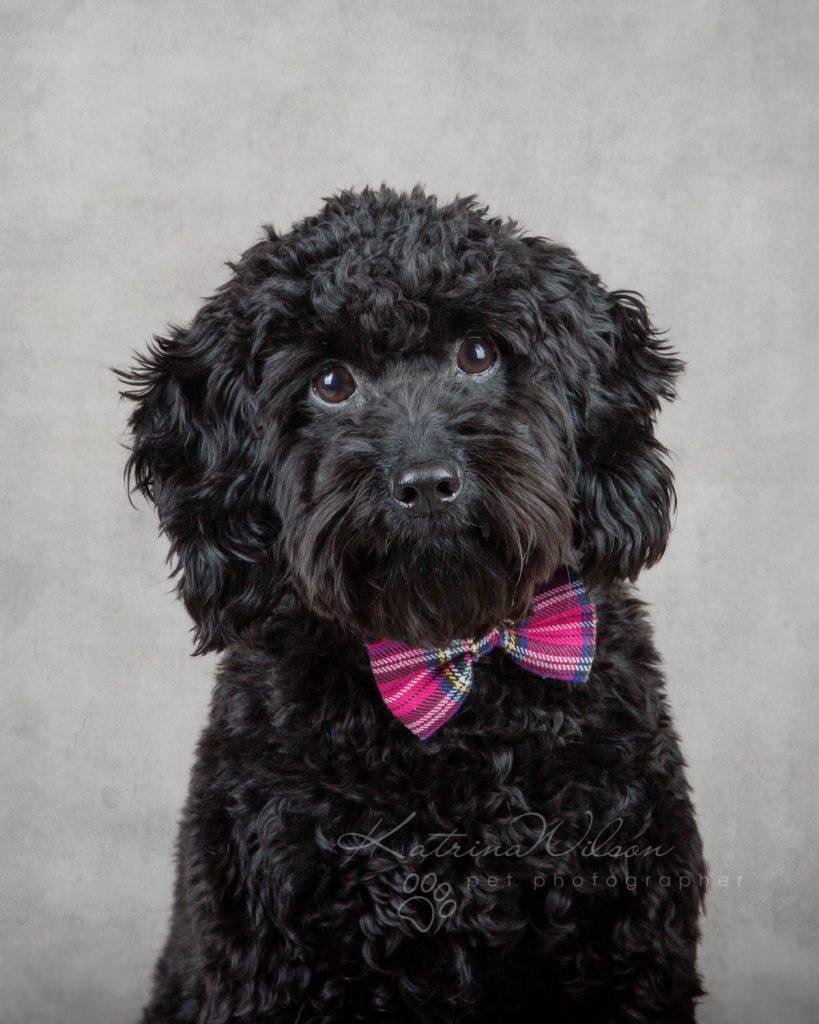 Award Winning Dog photographer Bedfordshire - Katrina Wilson-7