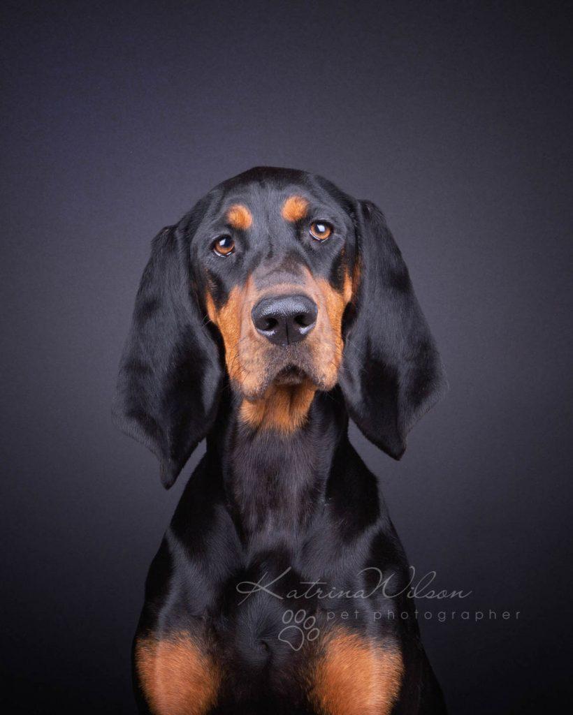 Award Winning Dog photographer Bedfordshire - Katrina Wilson-9