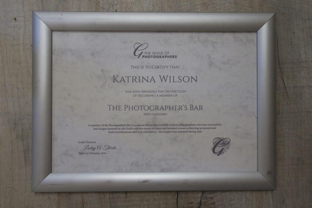 Katrina Wilson Dog Photoghraphy