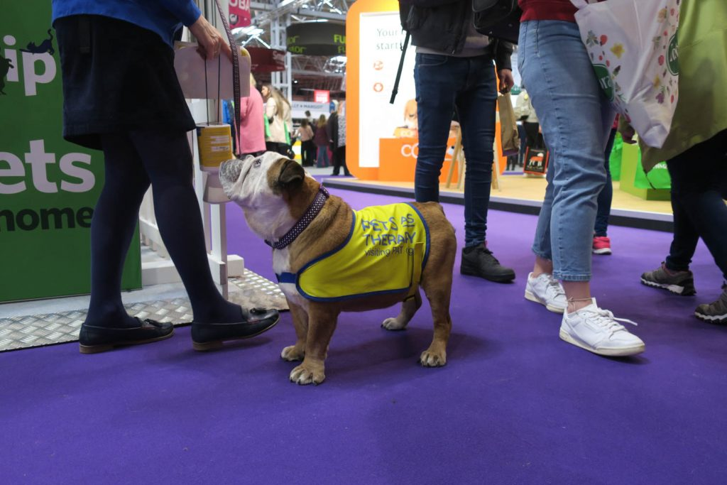 Crufts 2020 - Pets as Therapy - Katrina Wilson Dog Photography