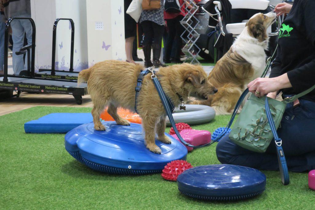 Crufts 2020 - dog training - Katrina Wilson Dog Photography