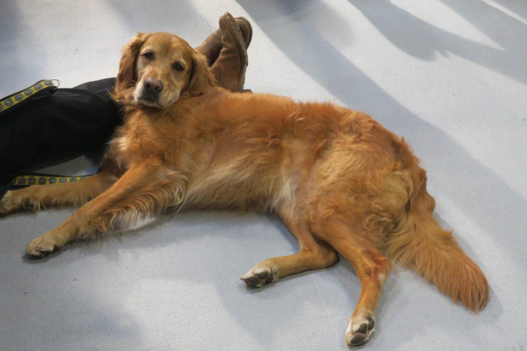 Crufts 2020 - laid back dog - Katrina Wilson Dog Photography