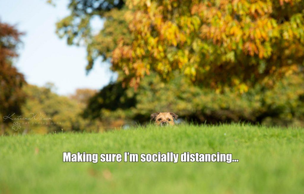 Lockdown Coronavirus Meme Katrina Wilson Dog Photography Bedfordshire-11