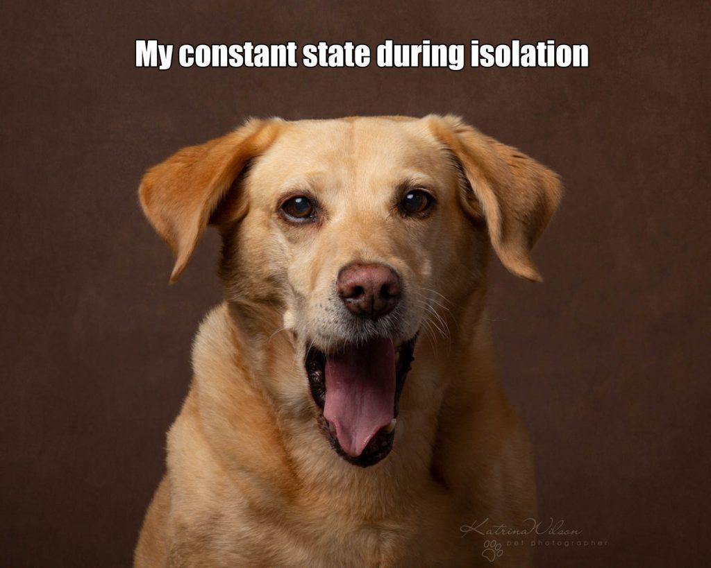 Lockdown Coronavirus Meme Katrina Wilson Dog Photography Bedfordshire-8