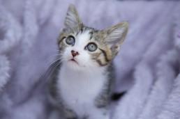 Katrina Wilson - Cat Photographer Bedfordshire