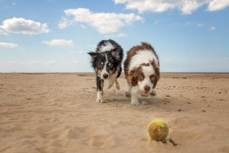 Katrina Wilson Dog Photographer Bedfordshire -90