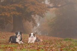 Katrina Wilson Dog Photographer Bedfordshire -90