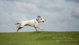Katrina Wilson Dog Photographer Bedfordshire UK