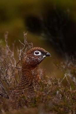 Katrina Wilson - Wildlife Photographer Bedfordshire