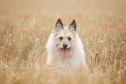 Dog Photographer Bedfordshire-1