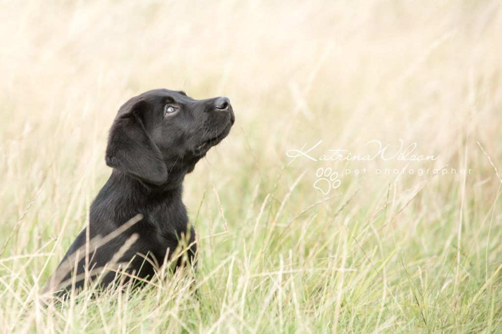 Blitz - Dog Photographer Bedfordshire-1-5