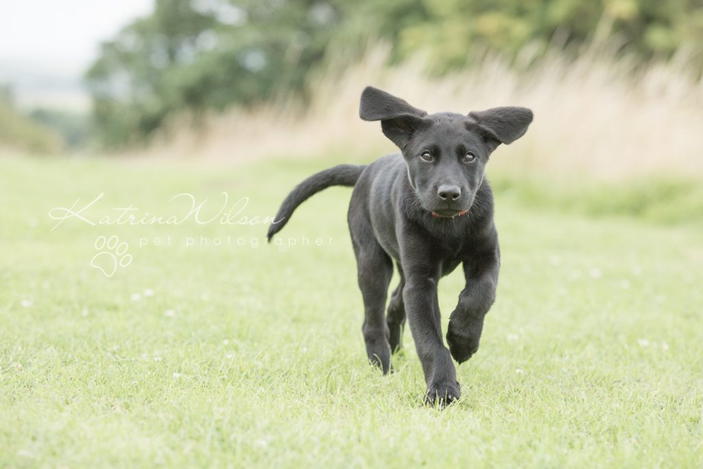 Blitz - Dog Photographer Bedfordshire-1-6