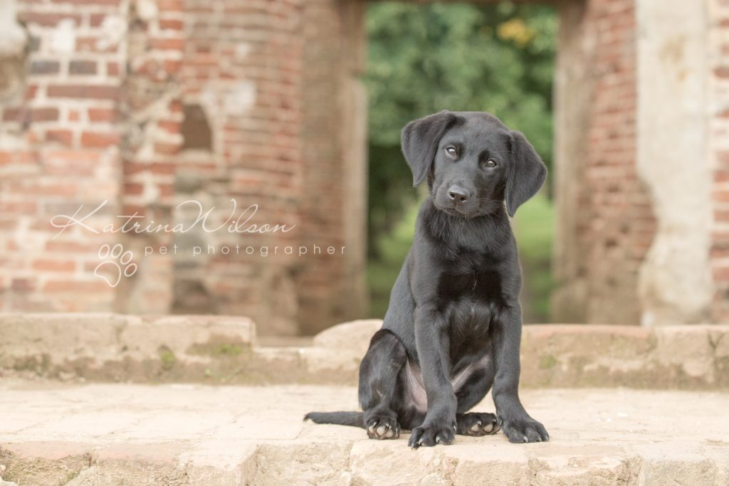 Blitz - Dog Photographer Bedfordshire-1-7