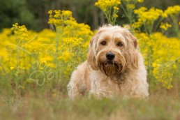Buddy-Dog photographer Bedfordshire-26