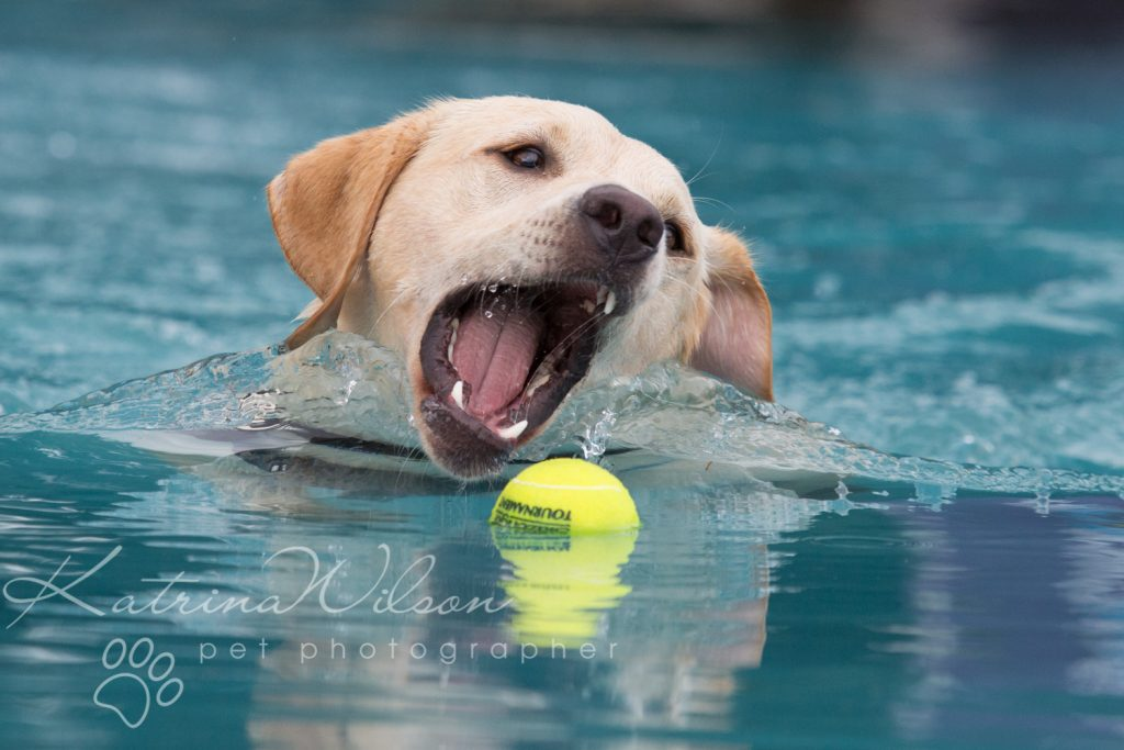 K9 Aqua Dock Diving - Dog Photographer Bedfordshire-1-4