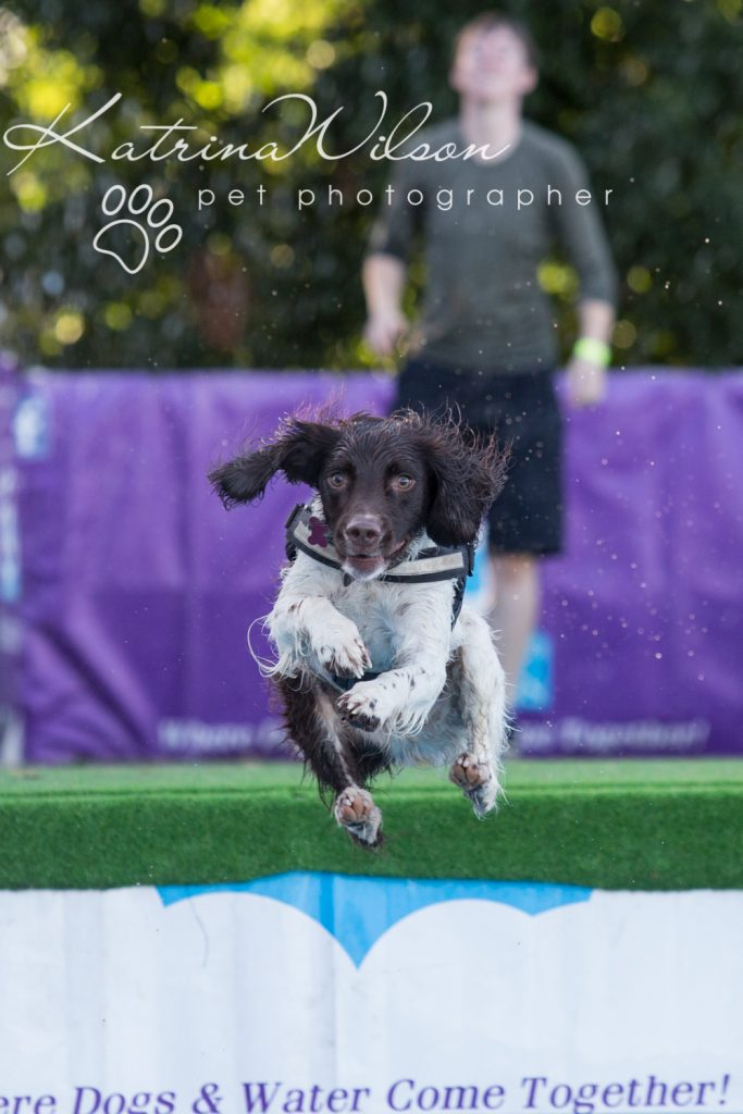 K9 Aqua Dock Diving - Dog Photographer Bedfordshire-1