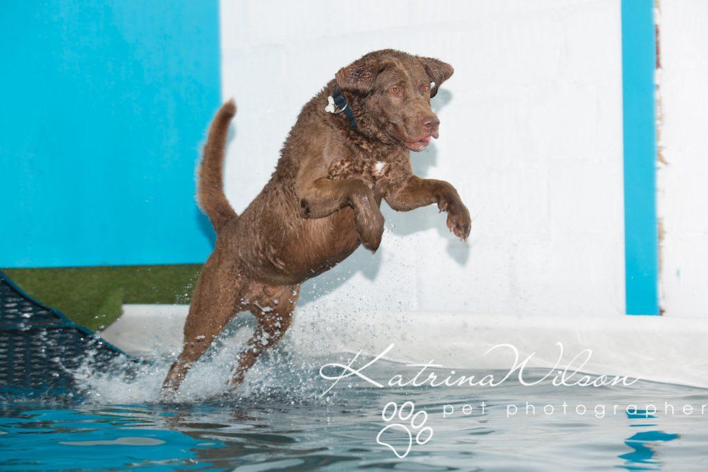Kaiden Swim Session - Dog Photographer Bedfordshire