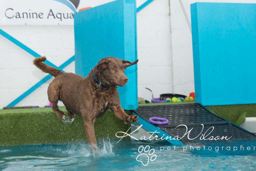 Kaiden Swim Session - Dog Photographer Bedfordshire-2