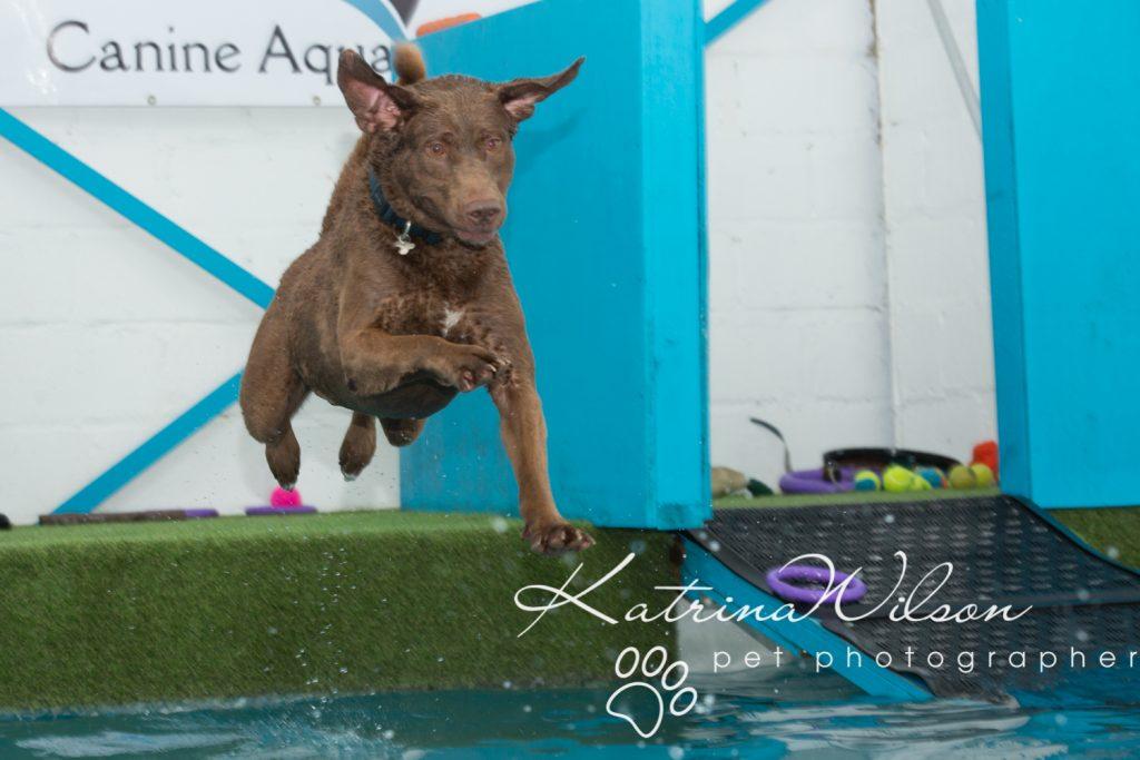 Kaiden Swim Session - Dog Photographer Bedfordshire-3