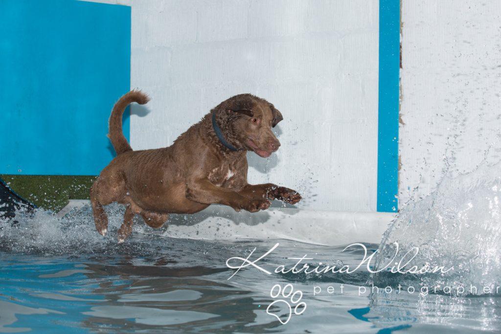 Kaiden Swim Session - Dog Photographer Bedfordshire-4