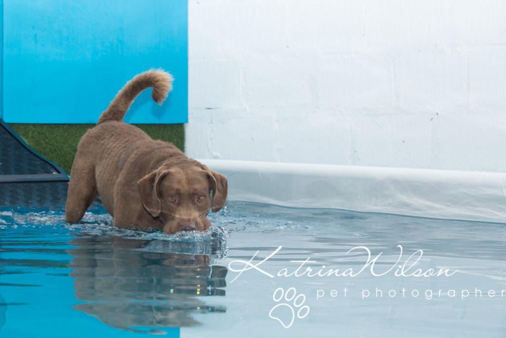 Kaiden Swim Session - Dog Photographer Bedfordshire-7