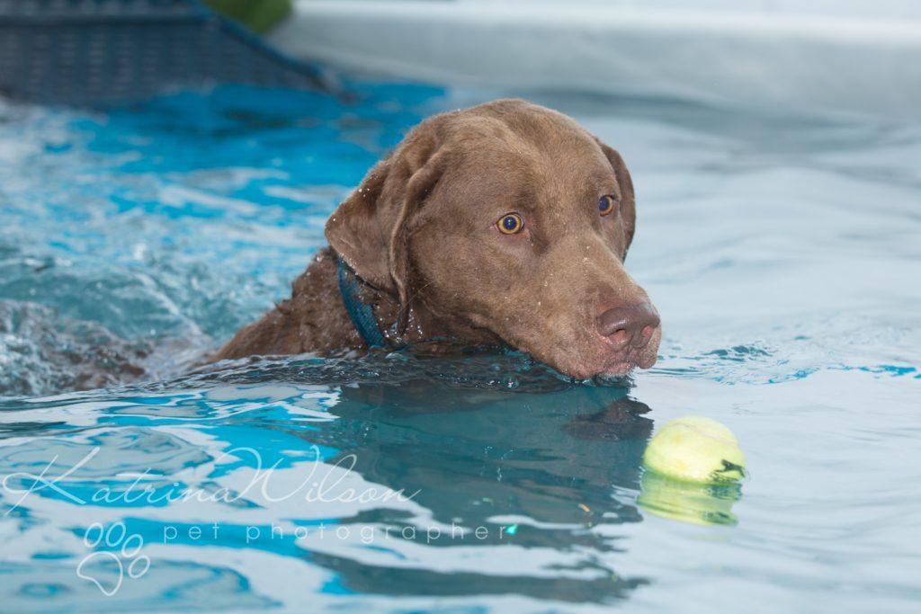 Kaiden Swim Session - Dog Photographer Bedfordshire-8