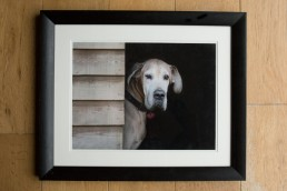 Christmas Gift Ideas for Pets - Dog Photography Bedfordshire-10