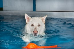 Christmas Gift Ideas for Pets - Dog Photography Bedfordshire-3
