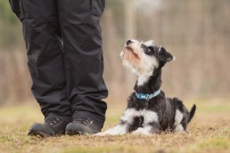 Christmas Gift Ideas for Pets - Dog Photography Bedfordshire-4