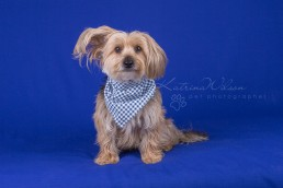 Christmas Gift Ideas for Pets - Dog Photography Bedfordshire