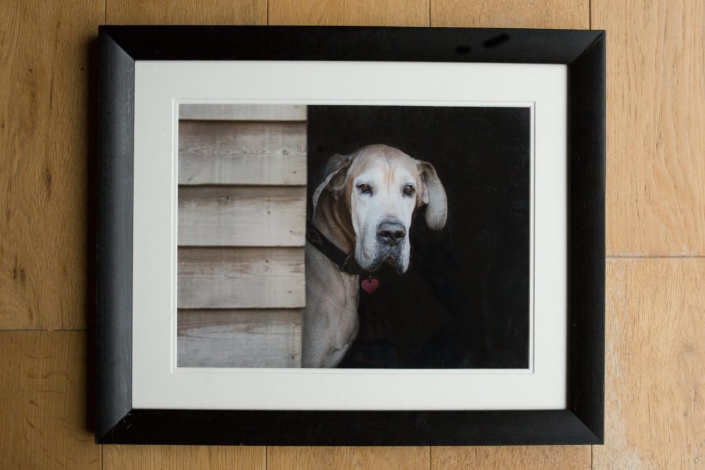 10 things to consider when choosing a pet photographer - Dog Photographer Bedfordshire-3