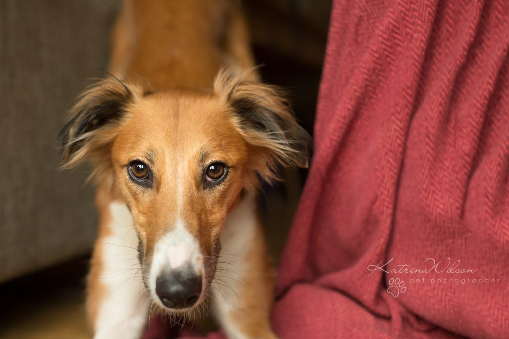 10 things to consider when choosing a pet photographer - Dog Photographer Bedfordshire-4
