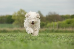 10 things to consider when choosing a pet photographer - Dog Photographer Bedfordshire-5