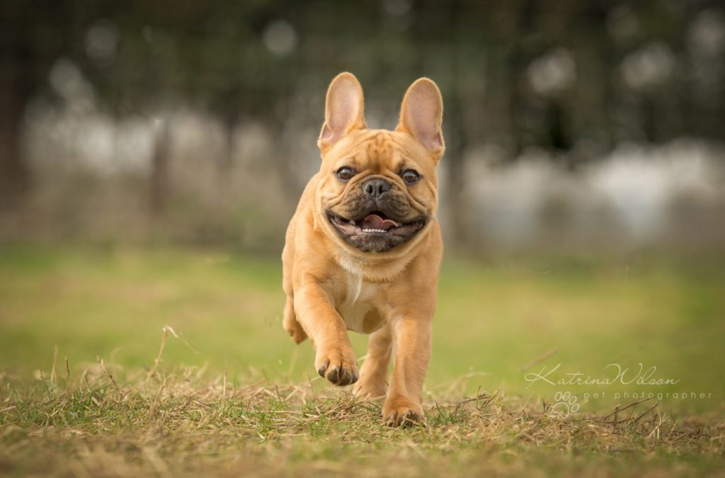 10 things to consider when choosing a pet photographer - Dog Photographer Bedfordshire-6