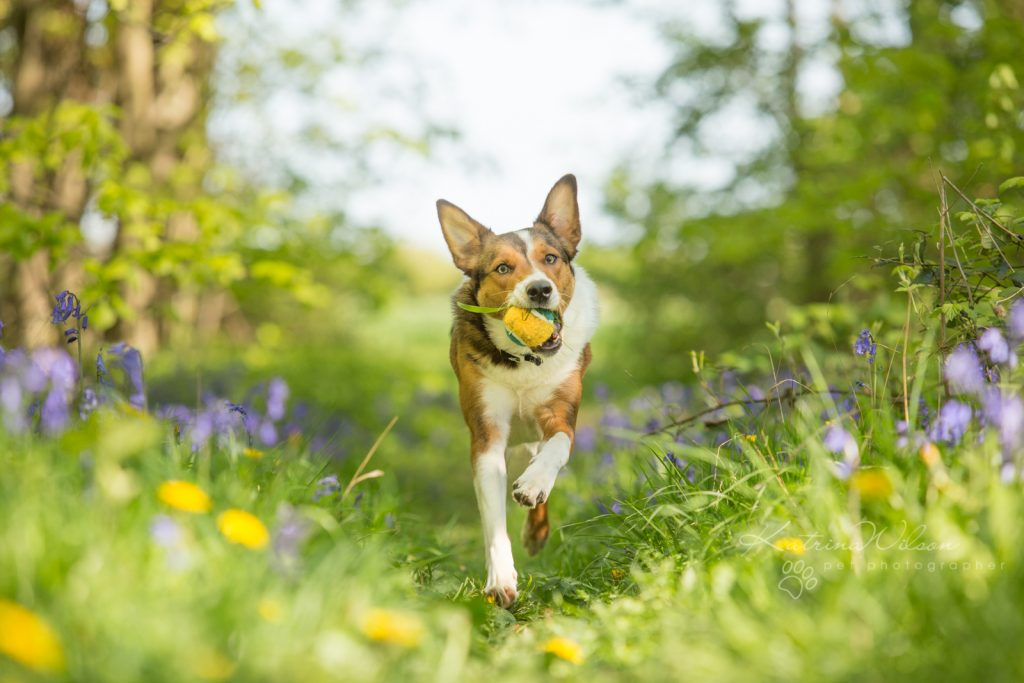 10 things to consider when choosing a pet photographer - Dog Photographer Bedfordshire-7