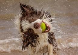 Katrina Wilson Dog Photographer Bedfordshire