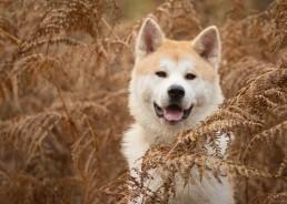 Katrina Wilson Dog Photograhy Bedfordshire