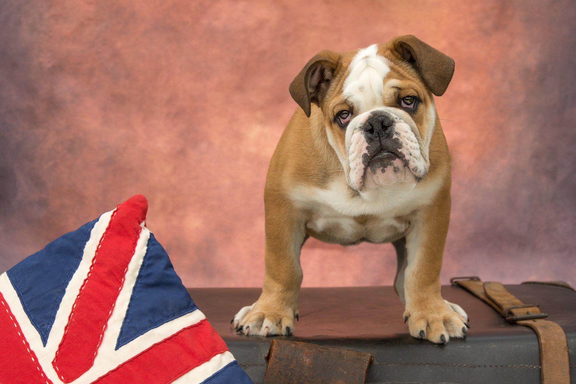 Katrina Wilson Dog Photographer Bedfordshire UK -26