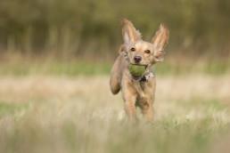 Katrina Wilson Dog Photographer Bedfordshire UK -79