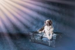 Katrina Wilson Dog Photography Bedfordshire