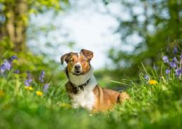 Katrina Wilson Dog Photography Bedfordshire-2