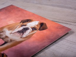 Framed Products - Katrina Wilson Dog Photography Bedfordshire-17