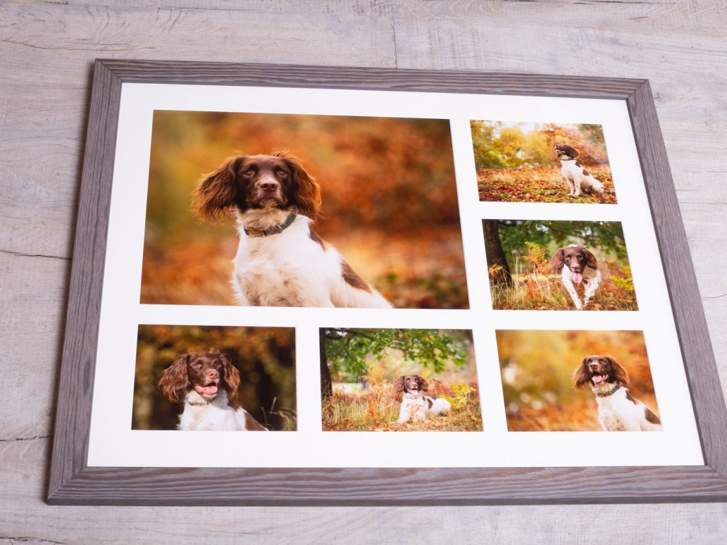 Springer Spaniel Photo Session - Katrian Wilson Dog Photographer Bedfordshire-1-2