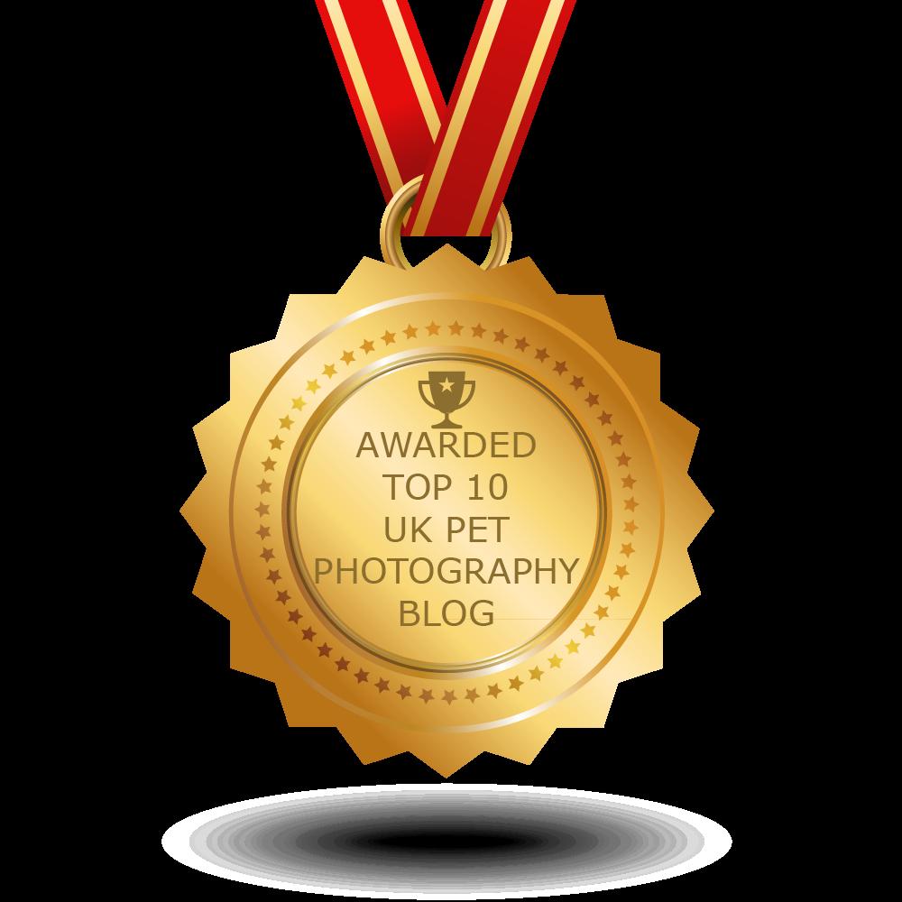 100 Top Pet Photography