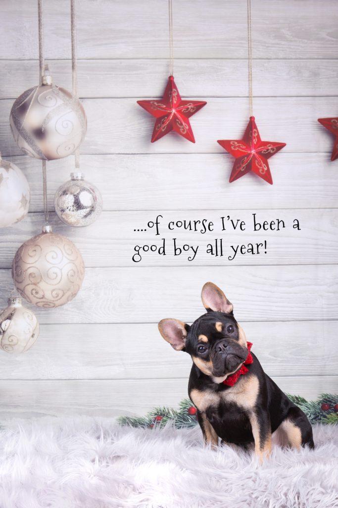 Katrina Wilson Dog Photography Bedfordshire Top 10 Christmas Dogs-2