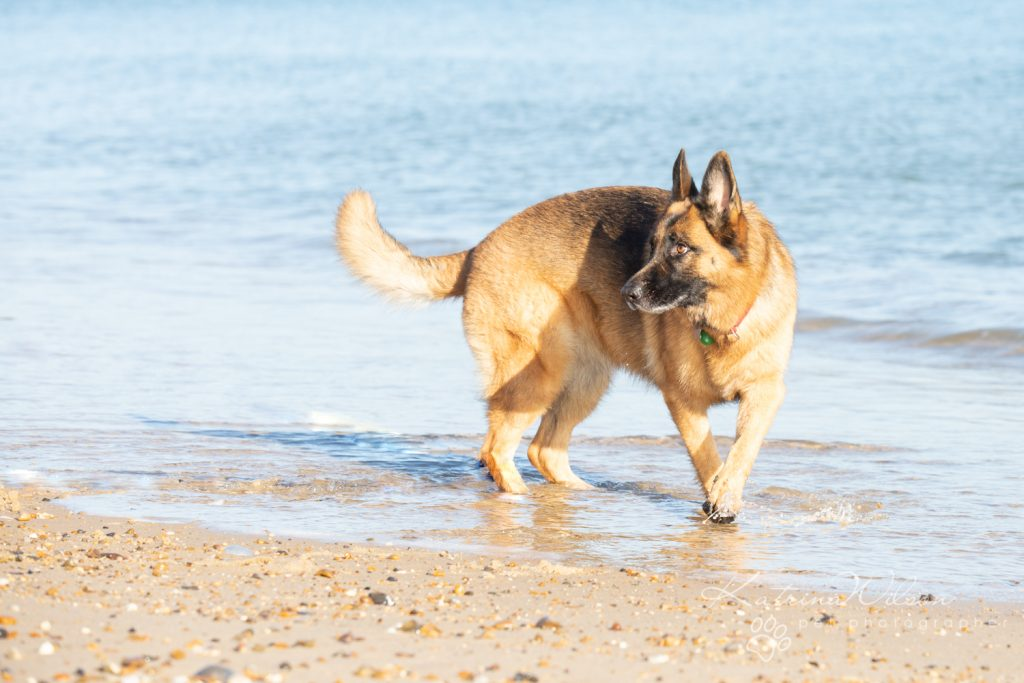 Katrina Wilson Dog Photography Bedfordshire Top 10 New Year Resolutions you should make with your dog-1